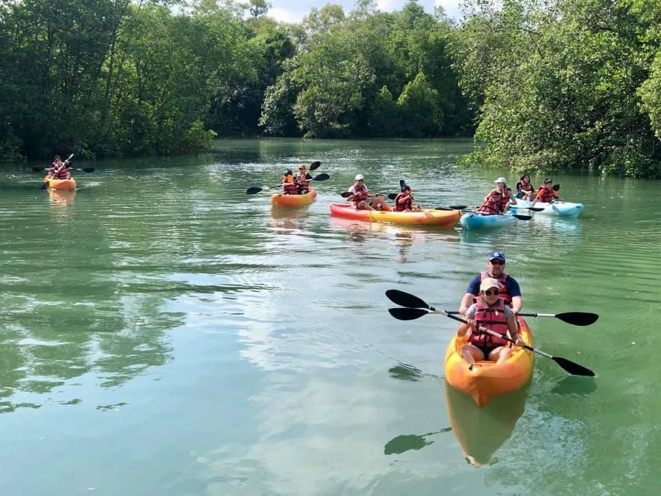 group of kayakers kayaking along mangrove