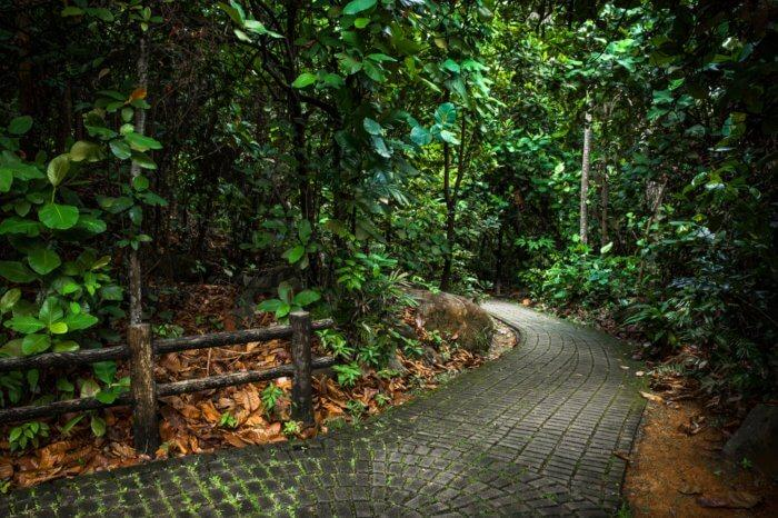 path inside bukit batok nature park