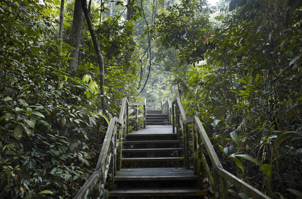 wooden steps in Bukit Timah Nature reserve