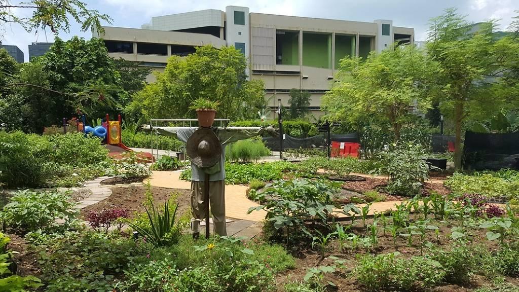 Garden in HortPark Singapore