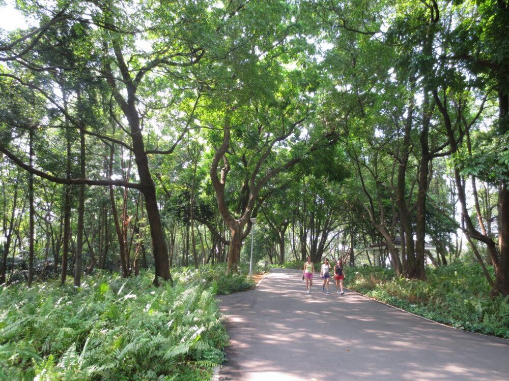 walking path in Kent Ridge Park Singapore