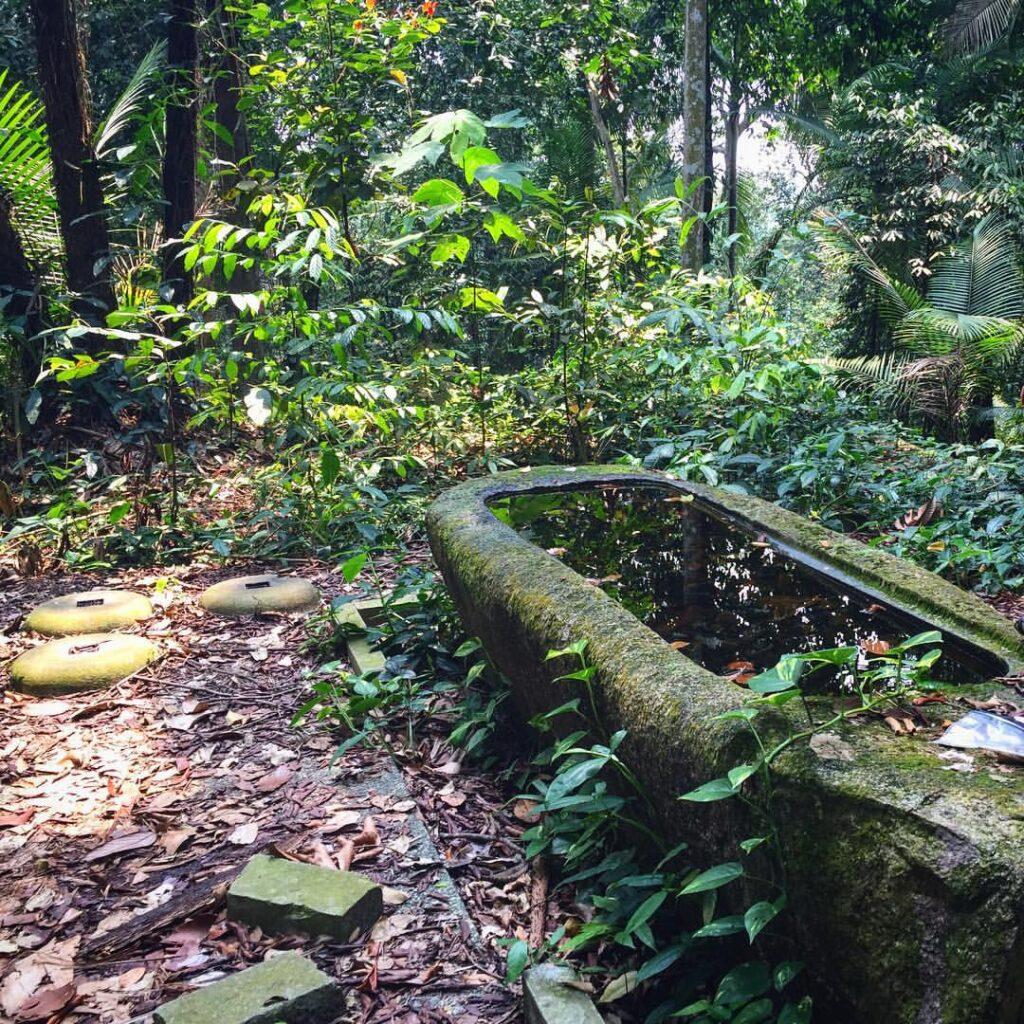 abandoned structure in syonan jinja in Macritchie reservoir