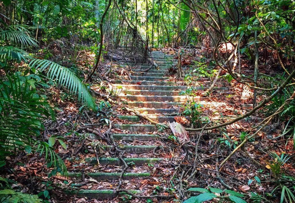 stairs leading to syonan jinja in Macritchie reservoir