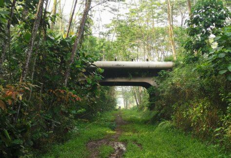 abandoned bridge along rail corridor