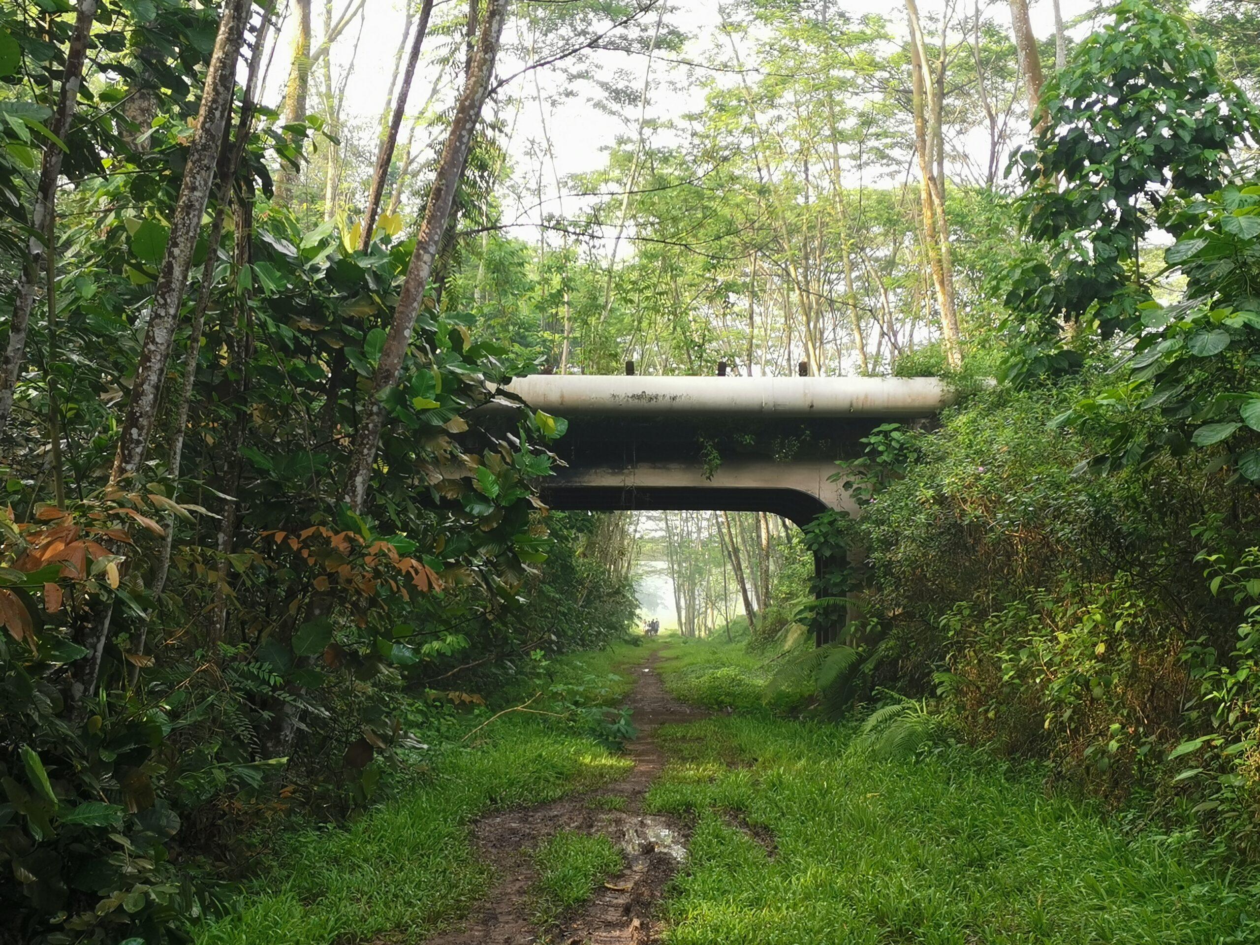 Singapore Rail Corridor (First Half)