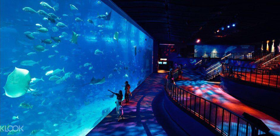 Large fish tank at Singapore S.E.A aquarium sentosa