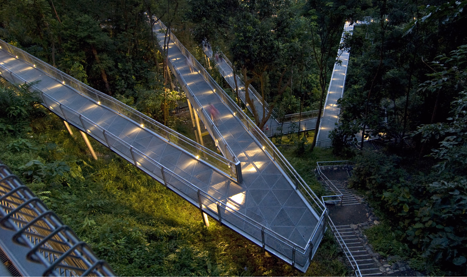 Elevated forest walkway in Telok Blangah Hill Park at night