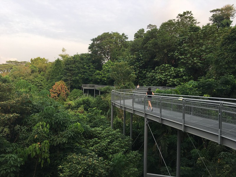 Elevated forest walkway in Telok Blangah Hill Park at day