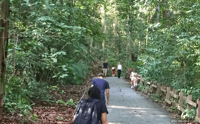 Steep slope in bukit timah nature reserve