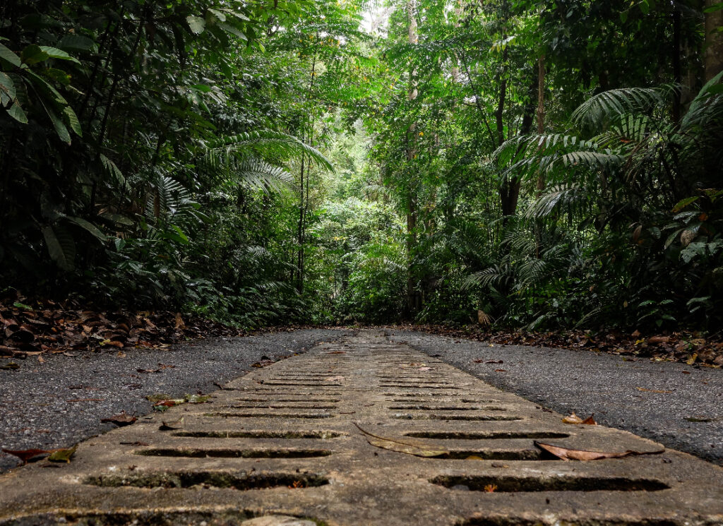 The Ultimate Guide to Bukit Timah Nature Reserve